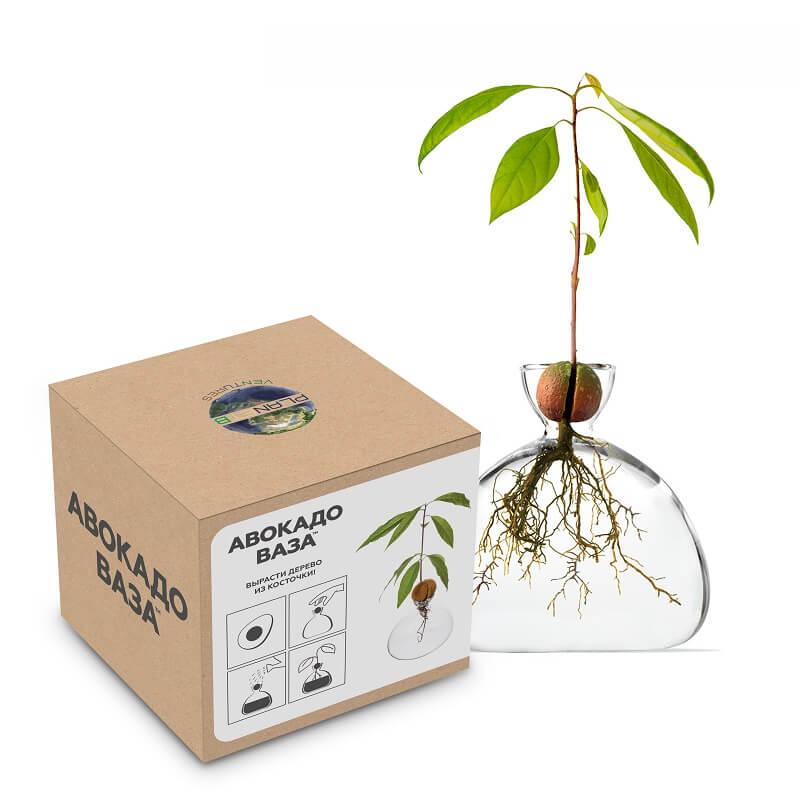 АВОКАДО ВАЗА - Ваза для выращивания дерева из косточки Авокадо (уценка, вскрытая коробка)